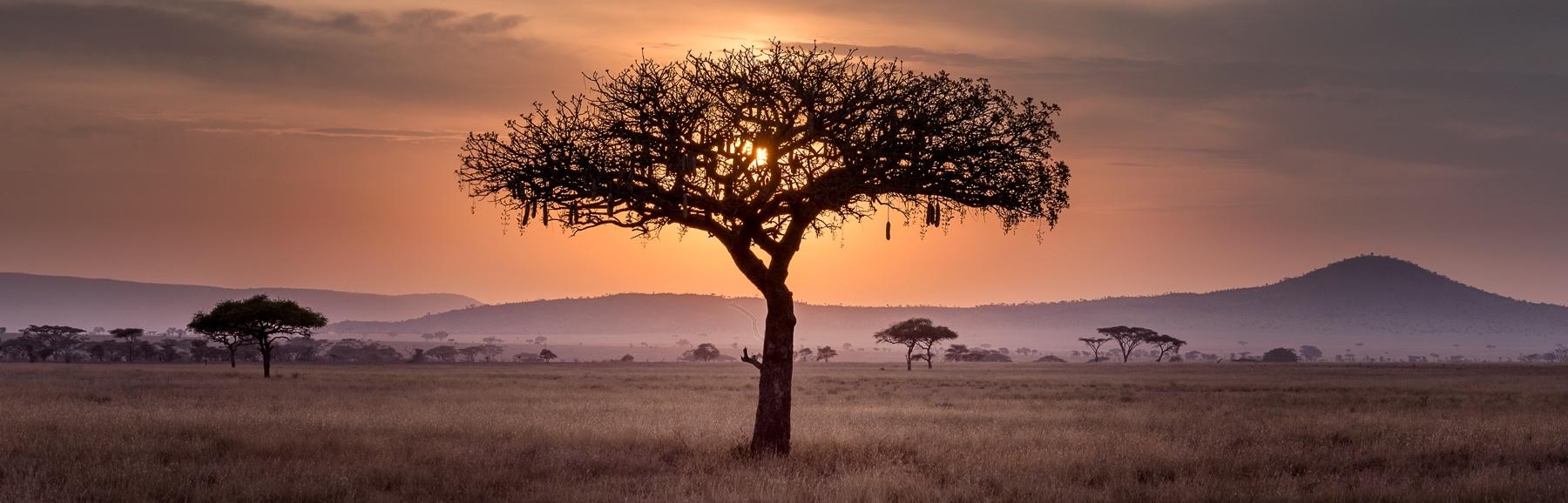 Video: African Awakening